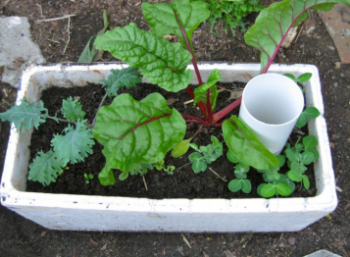 Wicker plant box