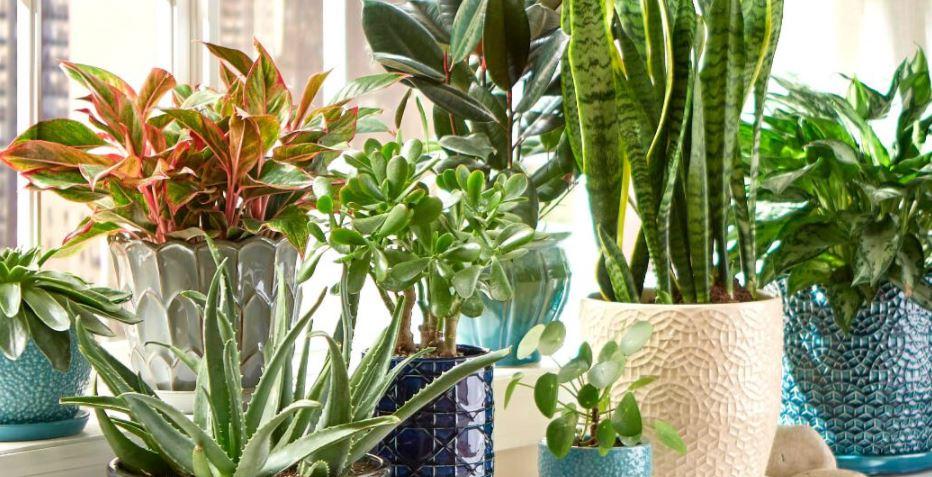 6 Best Indoor House Plants