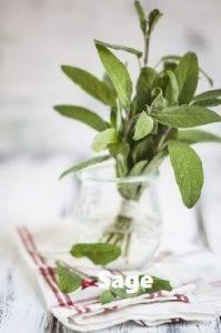 Mosquito repellent herb Sage