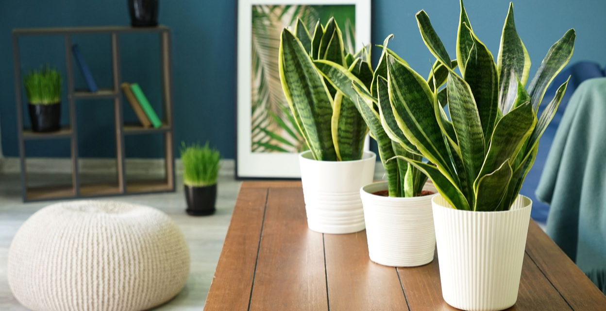 9 easy to grow air purification plants